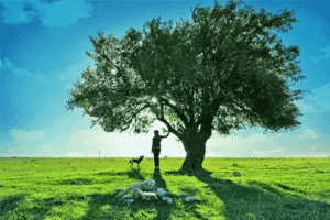 大树底下长不出大树